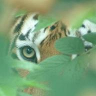 @TigersWay