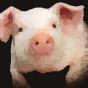 @PiggyPiglet