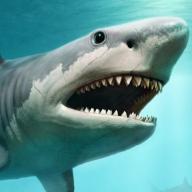 @SharkSnap