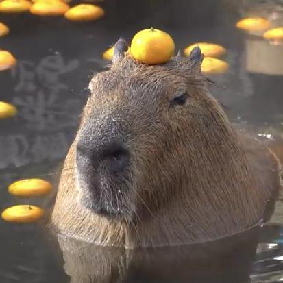 Zach Zulanas's avatar