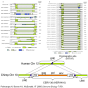 @Phylogeny