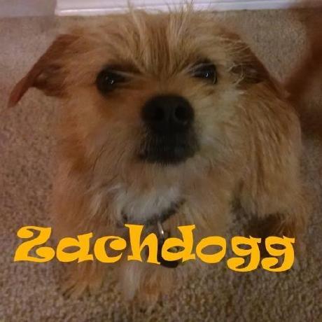 Zachdogg1