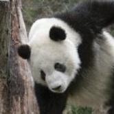 @PandaDrunkard