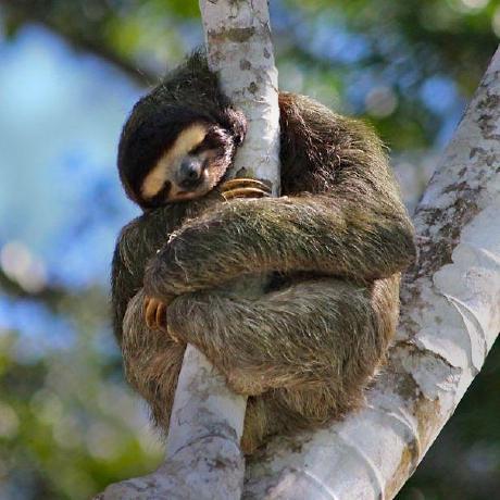 st-sloth