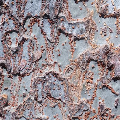 murder at granite falls rust and roxanne