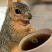 @coffee-squirrel