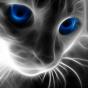 @Blueyescat