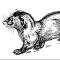 @Happy-Ferret