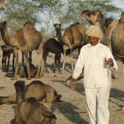 GitHub - jammazwan/jammazwan x_index: Apache Camel Examples