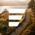 @festivaldev