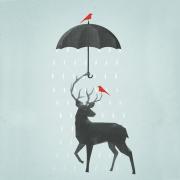 @raindeer
