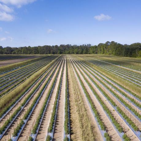 OliverMorenoGonzalez