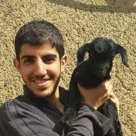 Mohammad Zolfaghari