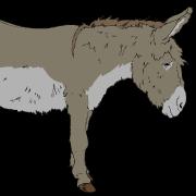 @horseboxer