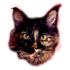 @catdad-llc
