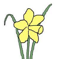 @daffodil
