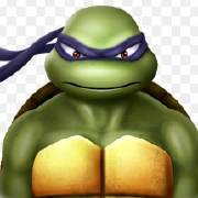 @box-turtle