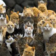 @toomanycats