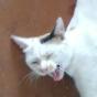 @duckimann