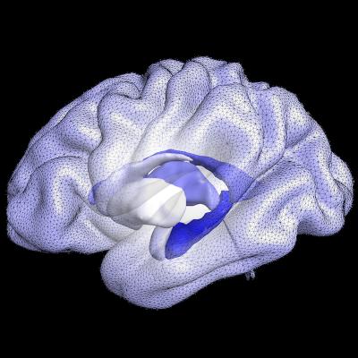GitHub - ai-med/QuickNATv2: Fast Whole Brain Segmentation (Layers