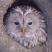 @owlsperspective