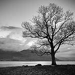 @weathered-tree