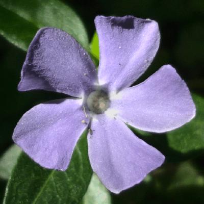 GitHub - galengold/pkgbuilds: PKGBUILDs I manage for the Arch User