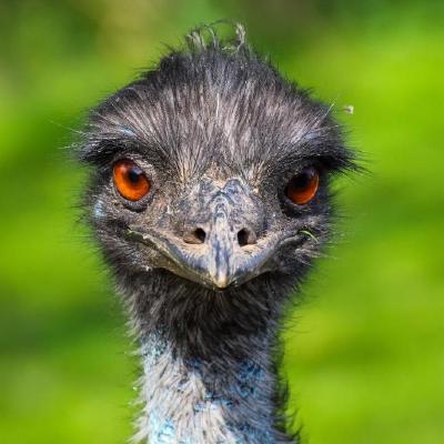 oscam-emu/oscam-emu patch at master · oscam-emu/oscam-emu