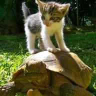 @TurtleKitty