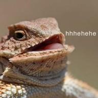 a Code Lizard