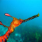 @weedySeaDragon