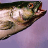 @doug-fish