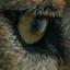 @ewolf